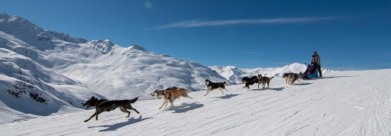 Hundspann i Alperna