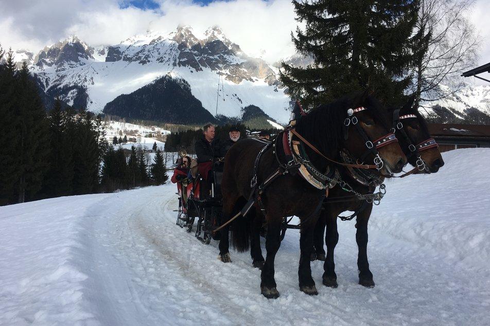 Hästsläde i Alperna